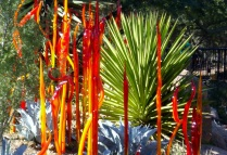 Chihuly in the Park, AZ
