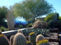 Chihuly and the Cacti, AZ