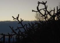 Sunrise, Tuscon
