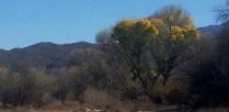 At the ranch, Tuscon