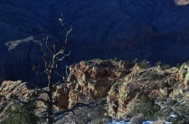 Petrified. Grand Canyon